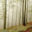 Picturesque beech forest - Stock Photo