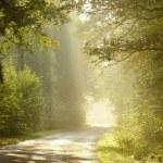 dimmiga landsvägen vid soluppgång — Stockfoto