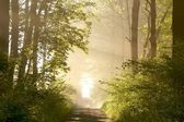 Spring forest at sunrise — Stock Photo