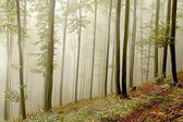 如诗如画的山毛榉森林 — 图库照片
