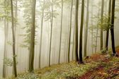 Picturesque beech forest — Stock Photo