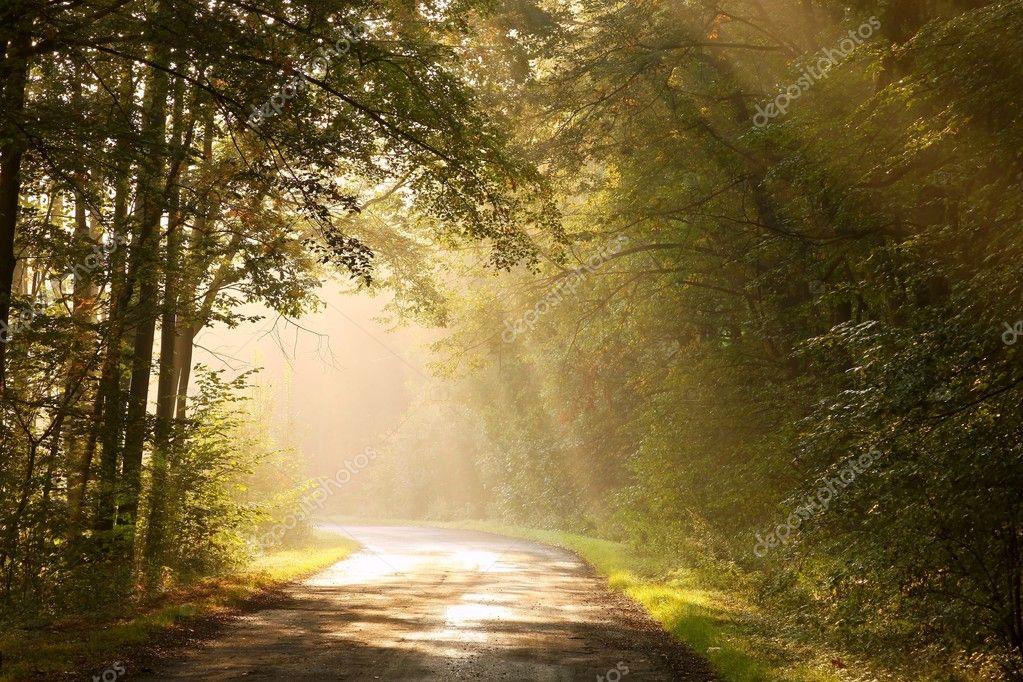 Фотообои Проселочная дорога в осеннем лесу