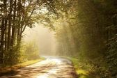 Country road in autumn forest — Stock Photo