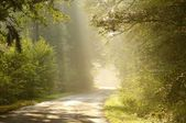 Misty country road at sunrise — Stock Photo