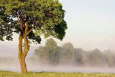 Drzewo klon wiosna — Zdjęcie stockowe