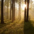 Sunrise through the trees in the forest — Stock Photo #3055274