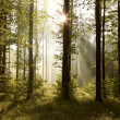 Sunrise in the forest — Stock Photo #3075608