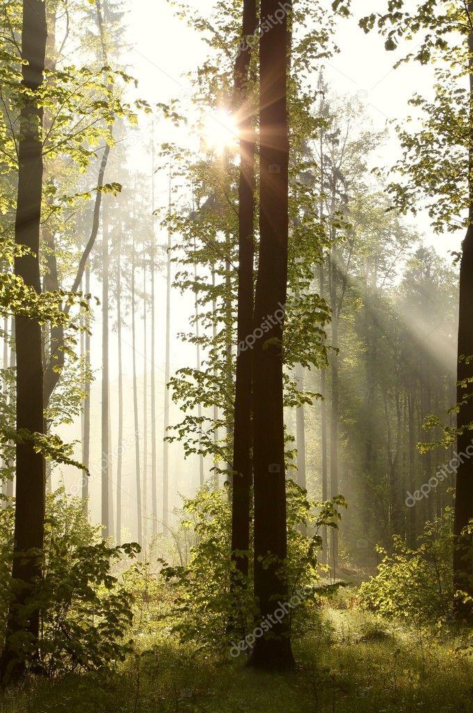 Фотообои Весенний лес на рассвете