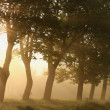 Trees backlit by the rising sun — Stock Photo #3086221