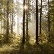 Sunrise in the forest — Stock Photo #3132709
