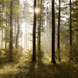 Stock Photo: Sunrise in the forest
