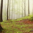 Royalty-Free Stock Photo: Misty spring forest