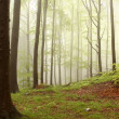 Misty spring forest — Stockfoto