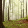 Stock Photo: Misty spring forest