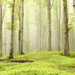 Enchanted spring forest - Stock Photo