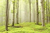 Enchanted spring forest — Stock Photo