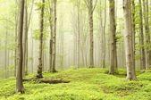 Foresta incantata di primavera — Foto Stock