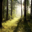 Stock Photo: Sunlight falling into forest