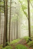 Path in the misty forest — Foto Stock