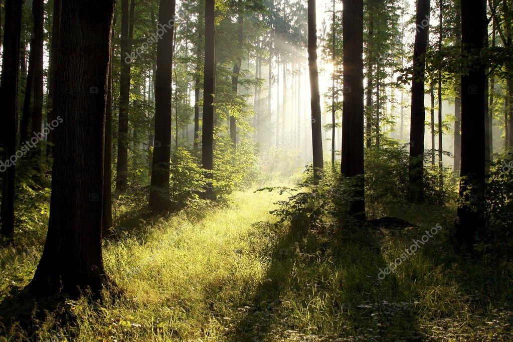 Фотообои Sunlight falling into forest