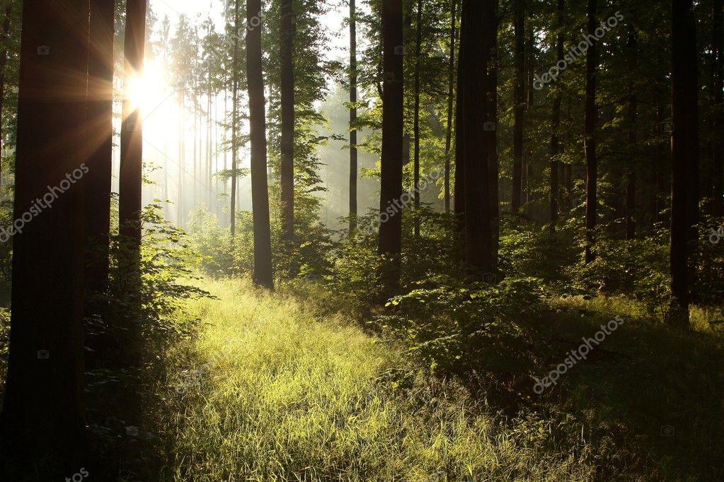 Фотообои Солнечный свет, падающий в лес