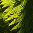 Fern in the forest — Stock Photo #3455897