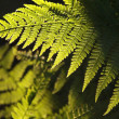 Fern in the forest — Stock Photo #3473255