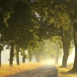 Country road at dawn — Foto Stock