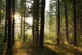 Misty forest at dawn — Stock Photo