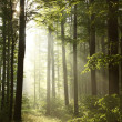 Misty forest at sunrise — Stock Photo