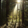 Mysterious forest — Stock Photo