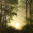 Mysterious forest at dawn — Foto Stock