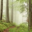 Stock Photo: Misty forest path