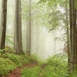 Misty forest path — Stock Photo #3621310