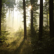 Spring forest in sunrise — Stock Photo