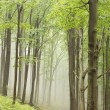 Misty forest path — Stock Photo