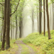 Path through foggy forest - Stock Photo