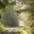 Country road through misty forest in the morning — Stock Photo
