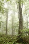 Deciduous forest surrounded by mountain mist — Stockfoto
