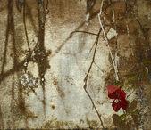 Grunge bougainvillea art background — Stock Photo