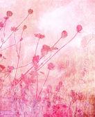 Rosa weichem Sommer Wiese Hintergrund — Stockfoto