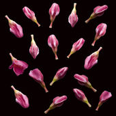 Pink flower buds — Stock Photo