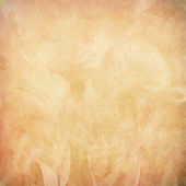 Peach feather abstract on paper — Stock Photo