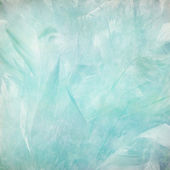Soft and pale blue feather abstract — Stock Photo