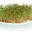 Cress — Stock Photo #3039785