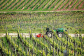 Farmer tractor in the vineyard — Stock Photo