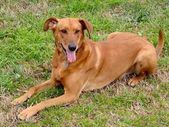 Een hond — Stockfoto