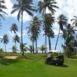 Palm trees on luxury golf course — Stok fotoğraf