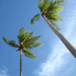 Palm trees on sky background — Stock Photo