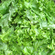 Fresh lettuce background — Stock Photo